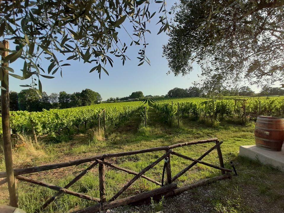 cesanese del piglio vino pipola prodotti tipici ciociari