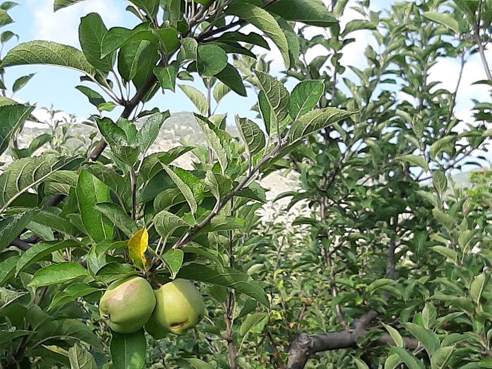 frutta e verdura ciociaria pipola
