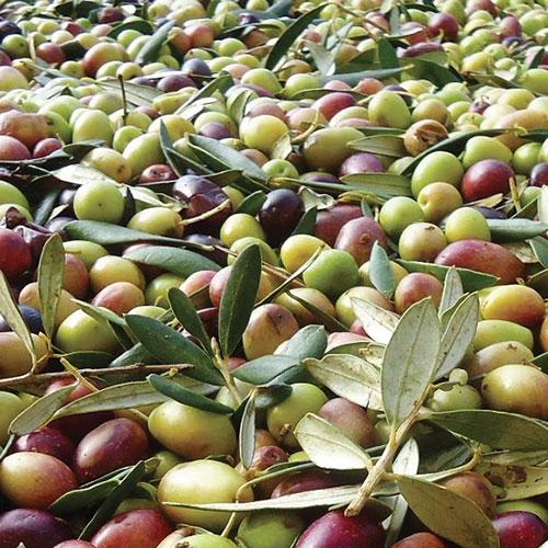 Frantoio La Marina San Donato Valcomino Frosinone - Olio Extravergine di oliva Ciociaro - Produttori Ciociari su Pipolà