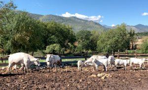 bufalo amaseno prodotti tipici ciociari