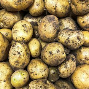 patate resalio produttori ciociari pipolà