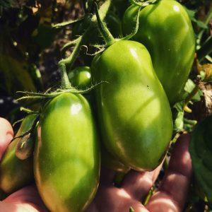produttori ciociari spesa agricola frosinone latina roma